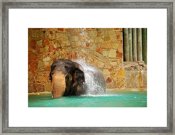 Elephant Framed Print by Thea Wolff