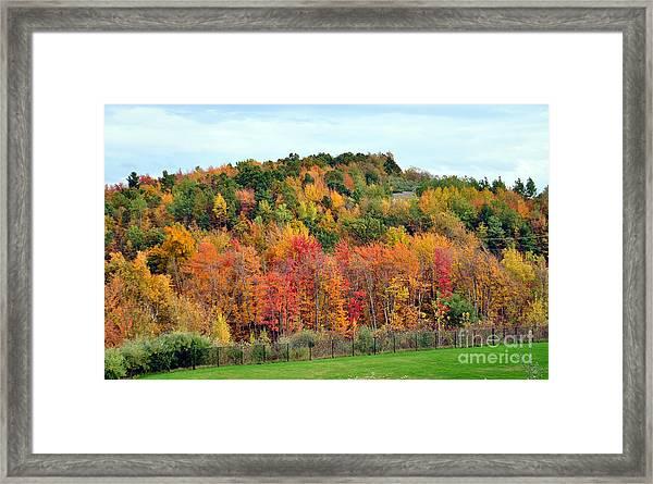 Fall Foliage In New England Framed Print
