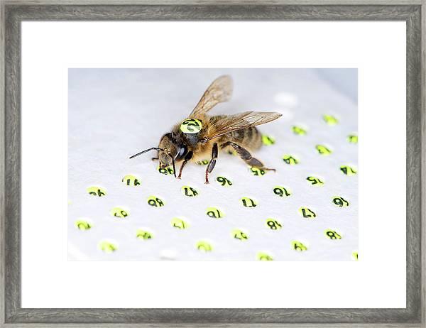 Honeybee Radar Tagging Framed Print