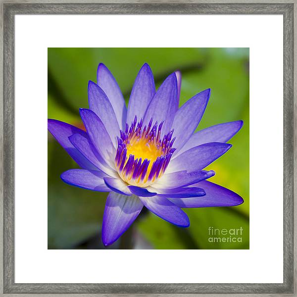 Pupukea Garden Breeze  Framed Print