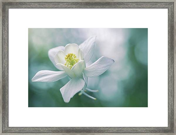 Purity Framed Print by Jacky Parker