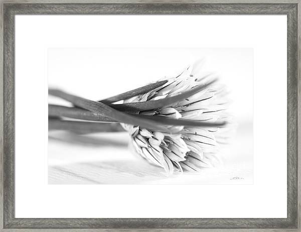 Chive Blossom Framed Print