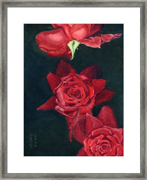 3 Roses Red Framed Print