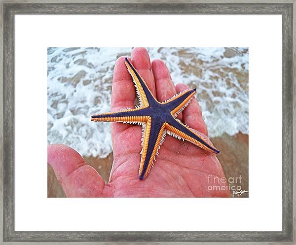 Royal Starfish - Ormond Beach Florida Framed Print