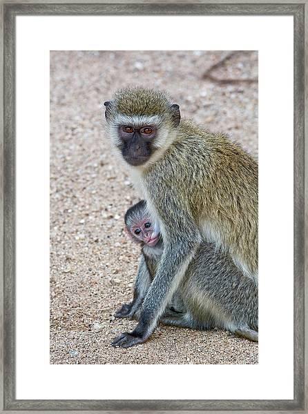 Tanzania, Lake Manyara National Park Framed Print