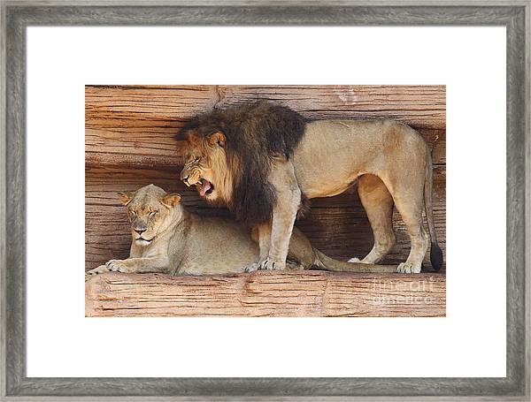 The Feline Honeymooners Framed Print