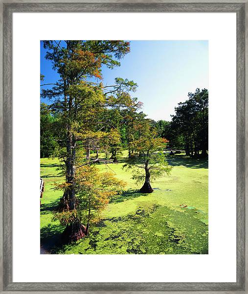 Usa, Tennessee, Reelfoot National Framed Print