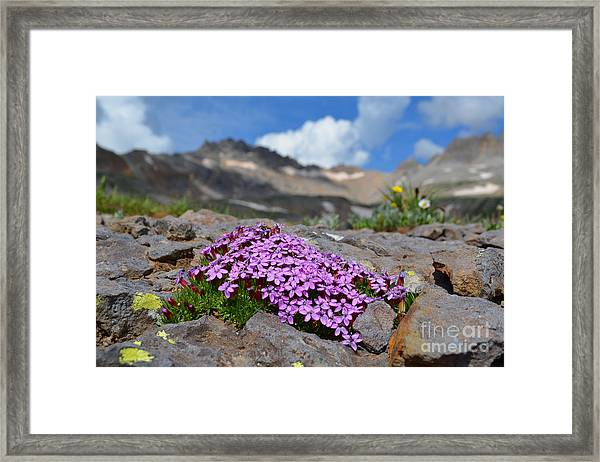 Framed Print featuring the photograph Wildflowers by Kate Avery