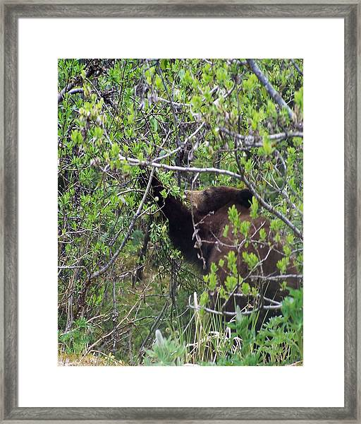 3159 Breakfast In Alaska Digital File Framed Print