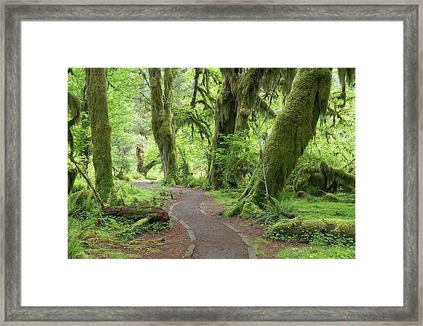 Usa, Washington, Olympic National Park Framed Print by Jaynes Gallery
