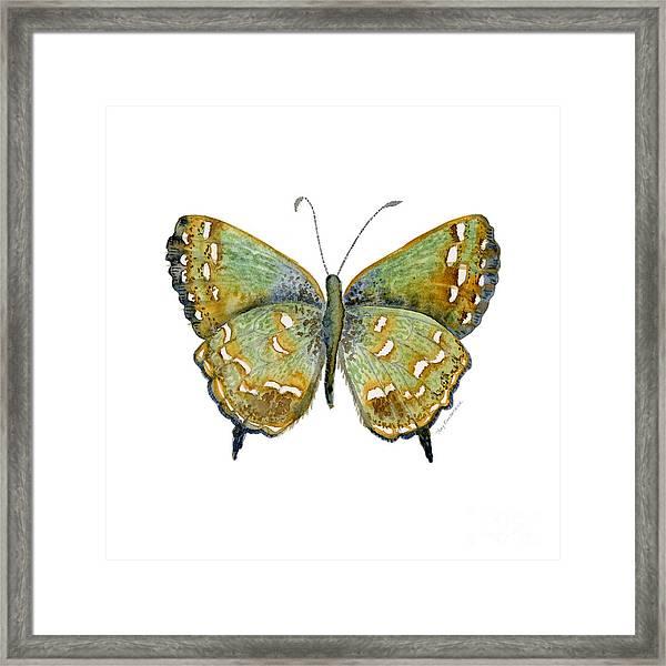 38 Hesseli Butterfly Framed Print