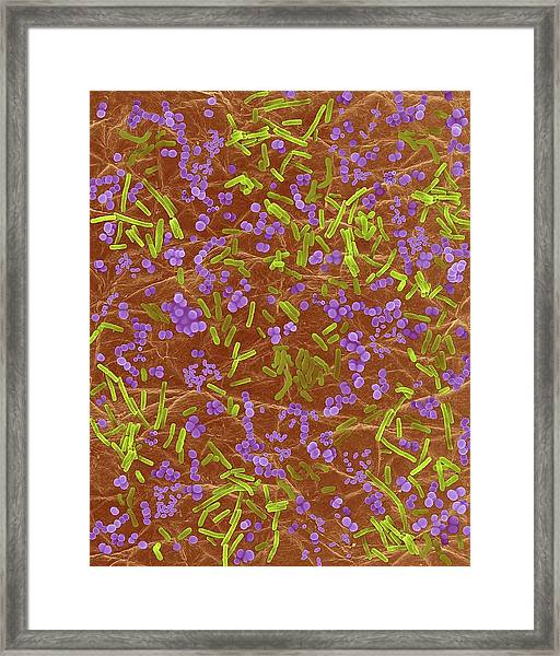 Bacteria On Human Skin Framed Print by Dennis Kunkel Microscopy/science Photo Library