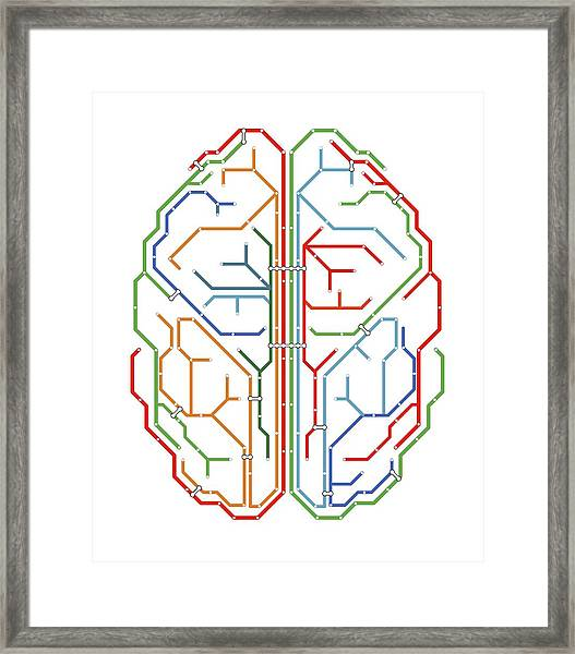 Brain Framed Print by Alfred Pasieka