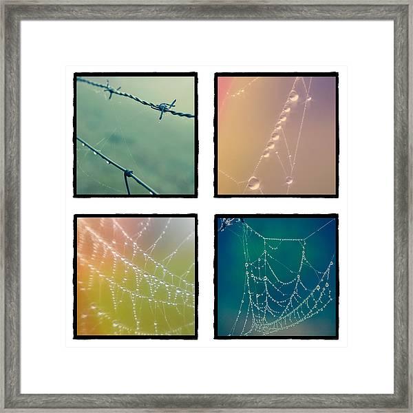 4 Color Web Droplets Framed Print