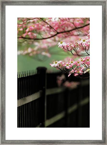 Dogwood Tree In Full Bloom, Audubon Framed Print by Adam Jones