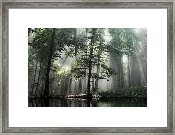 Forest Reflection Framed Print