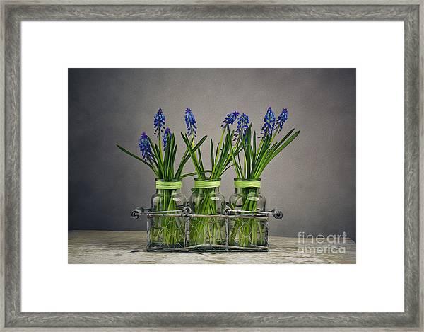 Hyacinth Still Life Framed Print