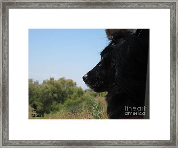 My Best Friend Framed Print