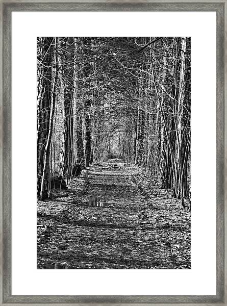 Framed Print featuring the photograph Pathway by David Armstrong