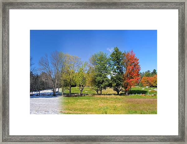 4 Season Trees In New Hampshire Framed Print