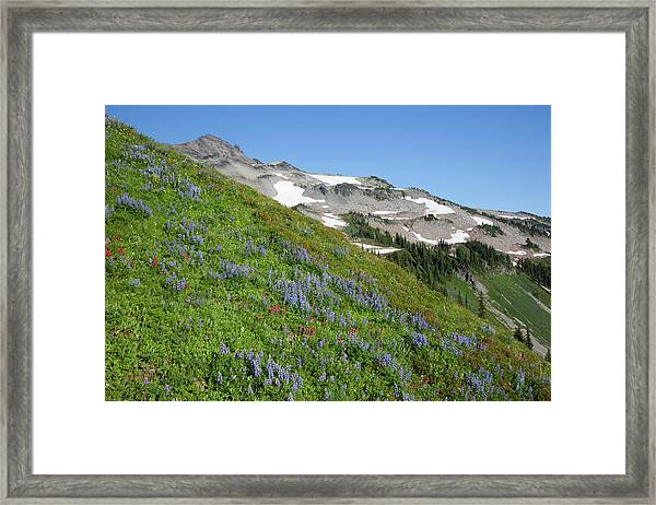Wa, Goat Rocks Wilderness, Subalpine Framed Print
