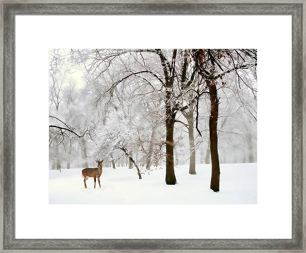 Winter's Breath Framed Print