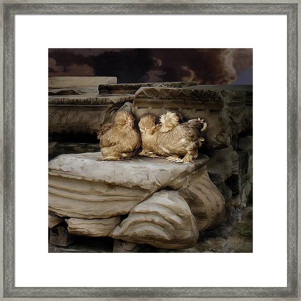 40. 3 Burmah Bantams Framed Print