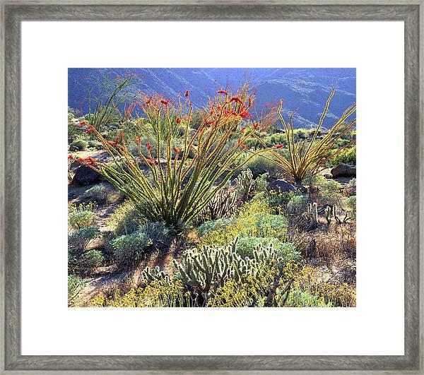 Usa, California, Anza-borrego Desert Framed Print
