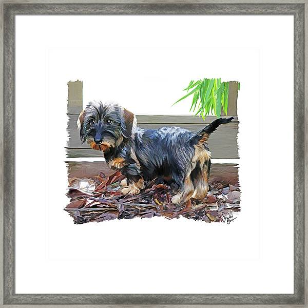 49. Pup Framed Print