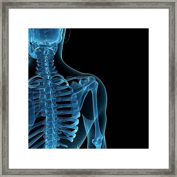 Upper Body Bones, Artwork Framed Print