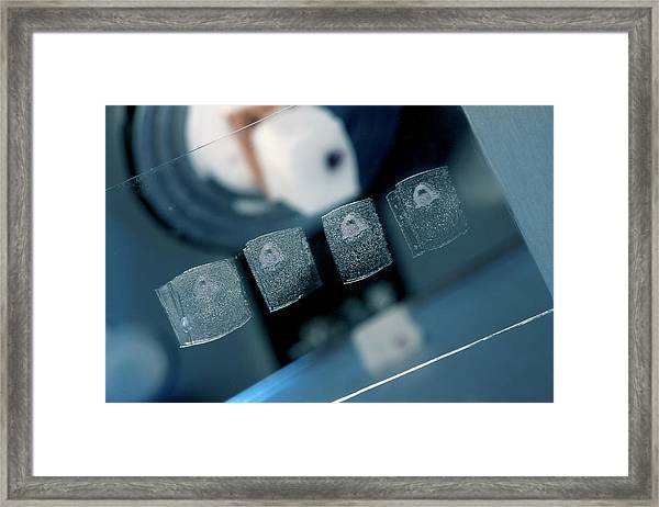 Cuttlefish Research Framed Print by Pascal Goetgheluck/science Photo Library