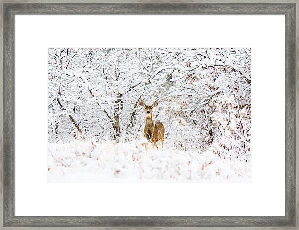 Doe Mule Deer In Snow Framed Print