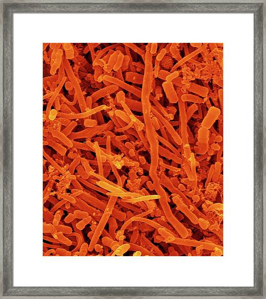 Human Oral Bacteria Framed Print by Dennis Kunkel Microscopy/science Photo Library