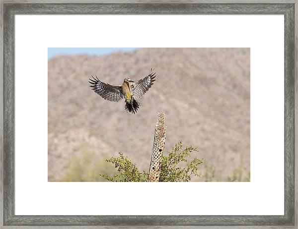 Usa, Arizona, Buckeye Framed Print