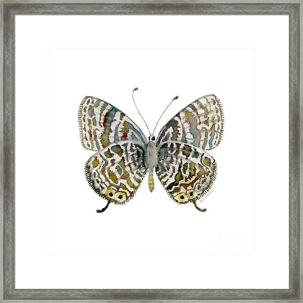 51 Lang's Short-tailed Blue Butterfly Framed Print