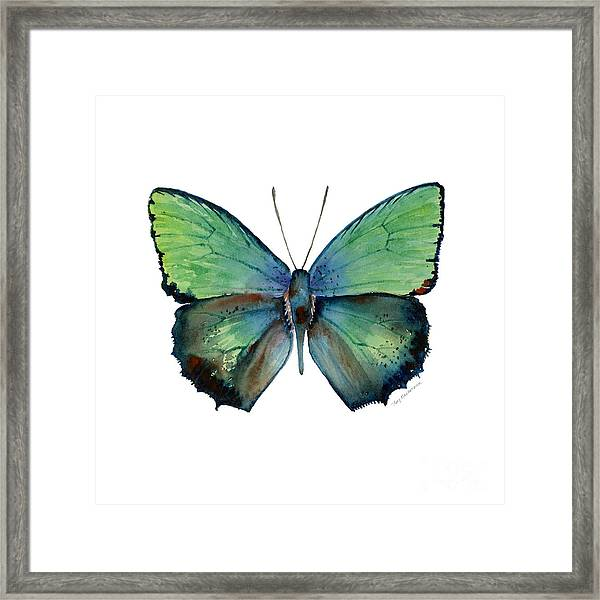 52 Arhopala Aurea Butterfly Framed Print