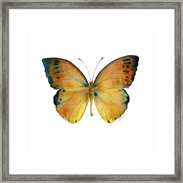 53 Leucippe Detanii Butterfly Framed Print