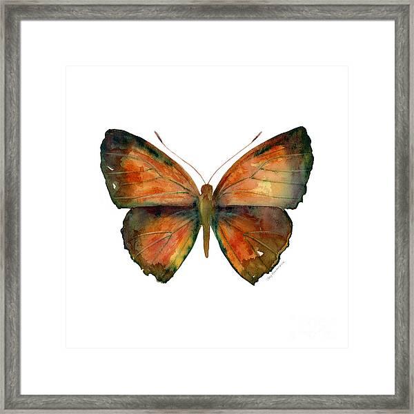 56 Copper Jewel Butterfly Framed Print