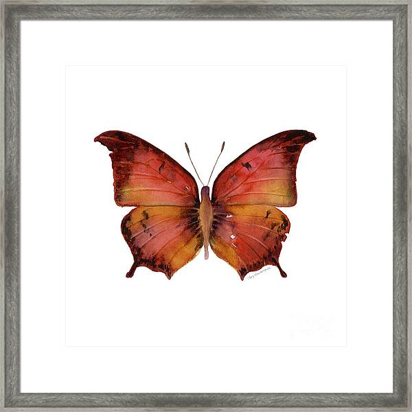 58 Andria Butterfly Framed Print