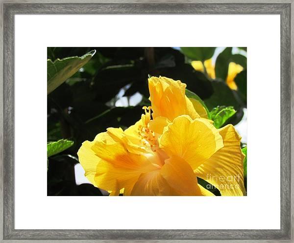 Boquete Flower Framed Print