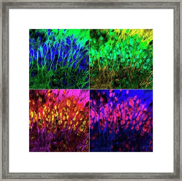 Brain Cells Framed Print by Dr. Chris Henstridge