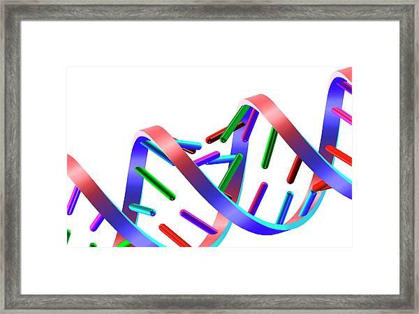 Dna Helix Framed Print