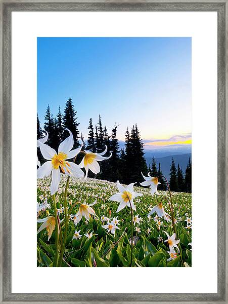 Usa, Washington State, Olympic National Framed Print by Gary Luhm