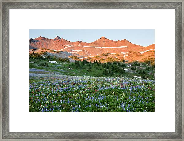 Wa, Goat Rocks Wilderness, Wildflower Framed Print