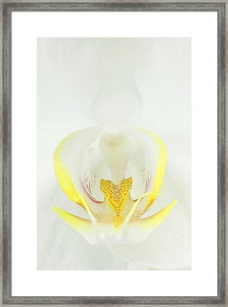 White Orchid-3 Framed Print