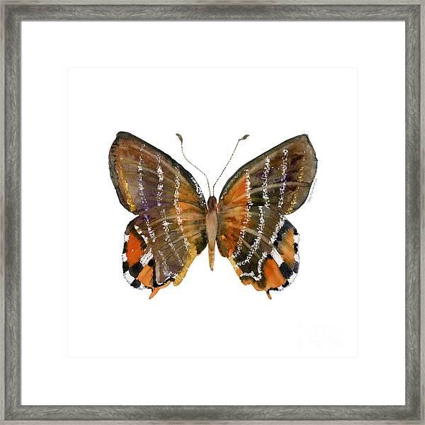 60 Euselasia Butterfly Framed Print