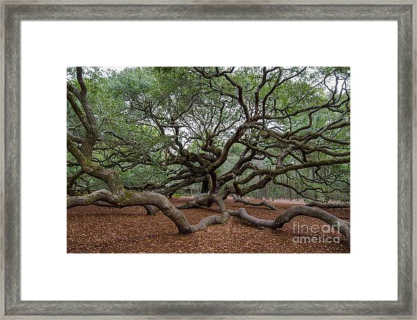 Mighty Branches Framed Print