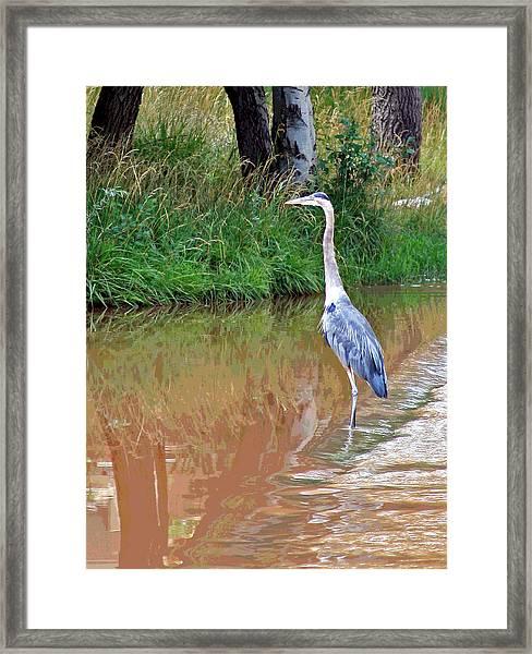 Blue Heron On The East Verde River Framed Print