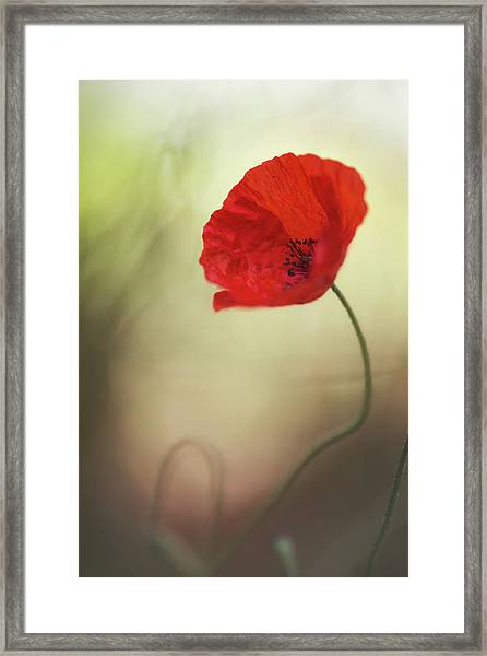 Untitled Framed Print by Keren Or
