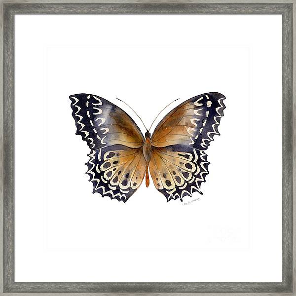 77 Cethosia Butterfly Framed Print